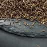 Тмин семена — фото